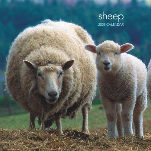 cover of  sheep 2008 square wall calendar by browntrout publishers