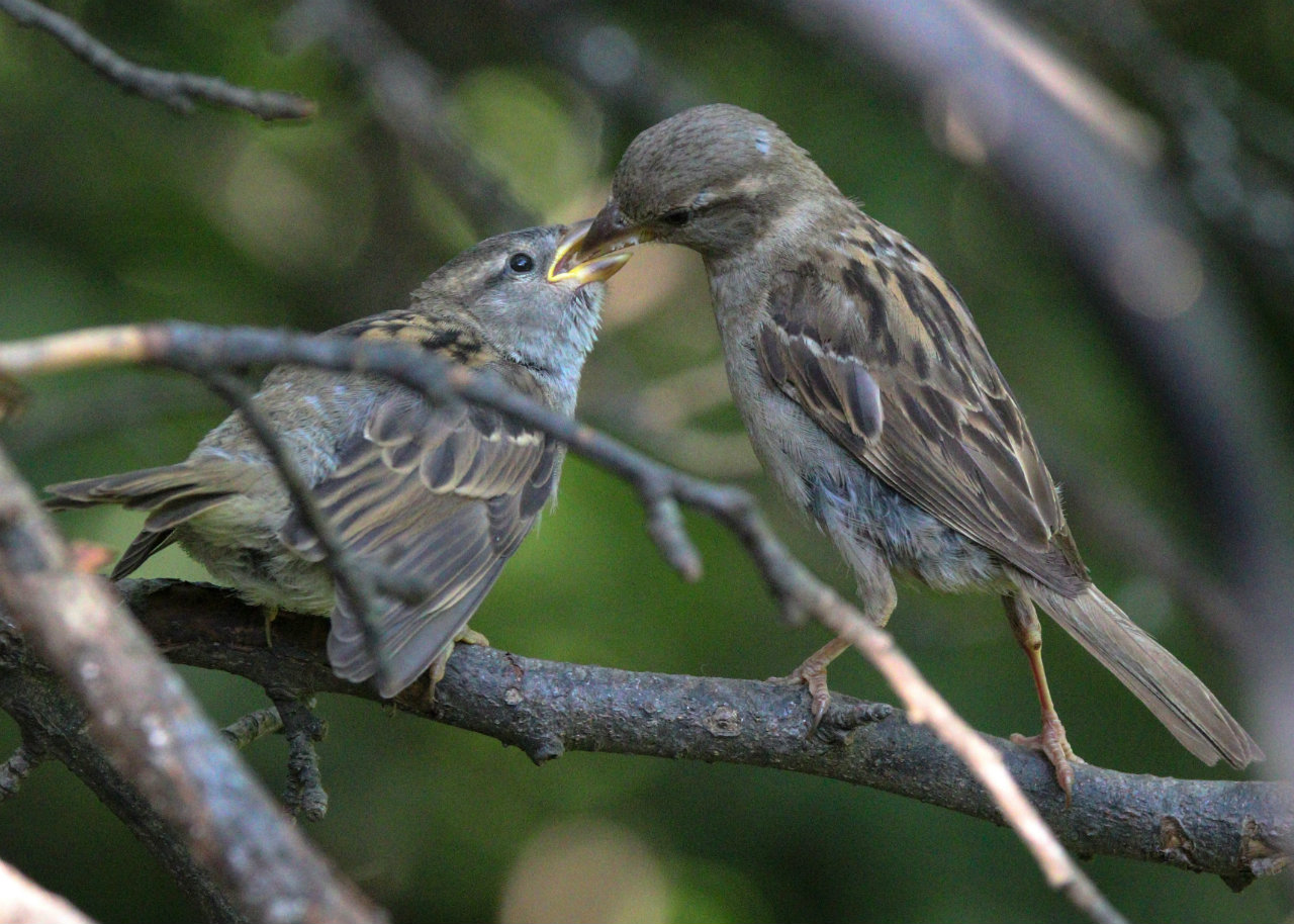 Young bird being fed breakfast (photo)